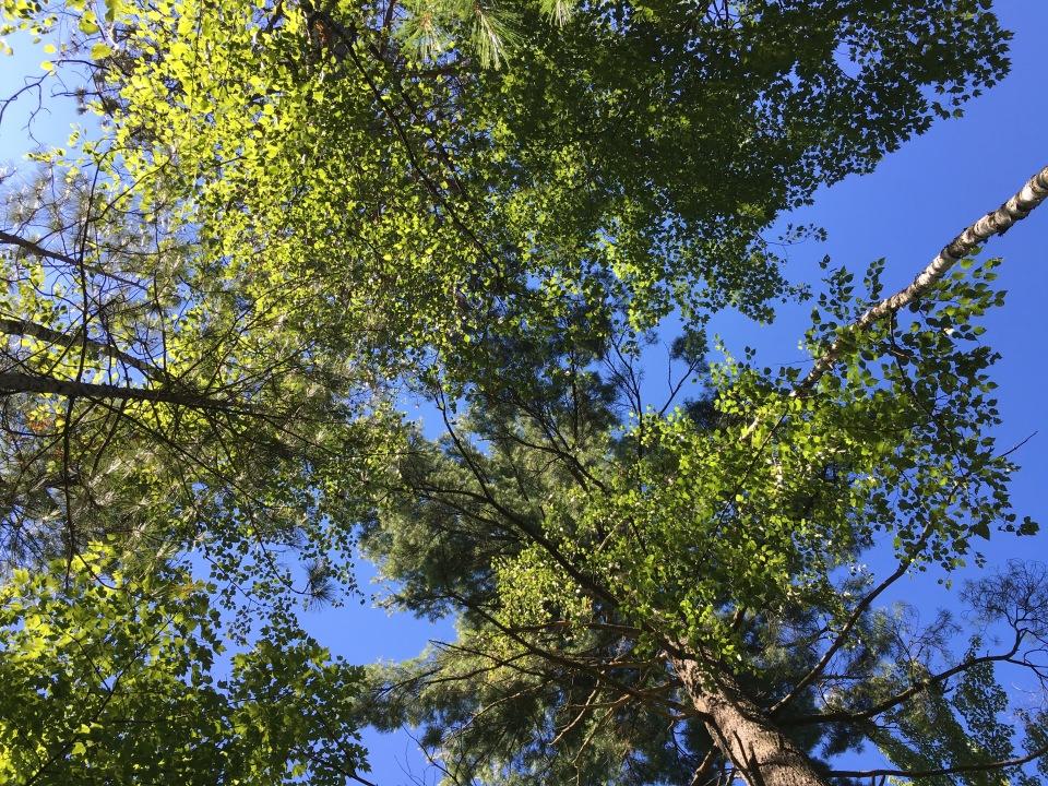 summers woods